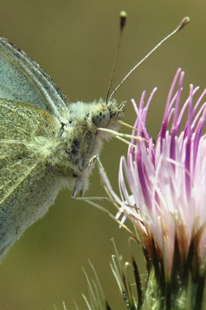 Spiritual Transformation Butterfly